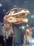 20090518マプサウルス親子
